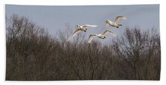 Tundra Swan Trio Beach Towel