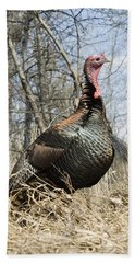 Turkey Tom Beach Towel
