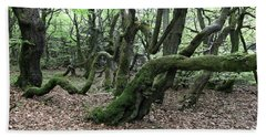 Beach Sheet featuring the photograph Twisted Trunks Of Beech Trees - Old Beech Forest by Michal Boubin