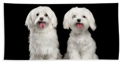 Two Happy White Maltese Dogs Sitting, Looking In Camera Isolated Beach Towel by Sergey Taran