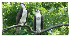 Beach Towel featuring the photograph Two On A Limb - Osprey by Donald C Morgan