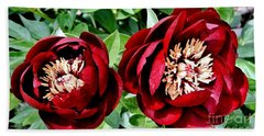 Two Red Peonies Beach Sheet