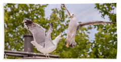 Two Seabird Fighting Beach Sheet
