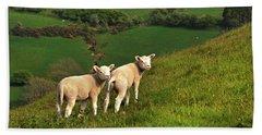 Two Welsh Lambs Beach Towel