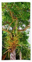 Beach Towel featuring the photograph Under A Tropical Tree M by Francesca Mackenney