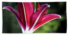Underside Of Asiatic Tiger Lily 1653 H_2 Beach Towel