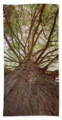 Up A Tree Beach Sheet