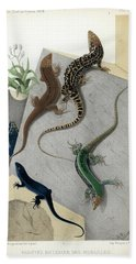 Beach Towel featuring the drawing Varieties Of Wall Lizard by Jacques von Bedriaga