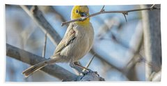 Verdin Collecting Nest Material Beach Towel by Tam Ryan