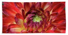 Veriegated Dahlia Beauty Beach Sheet by Debby Pueschel