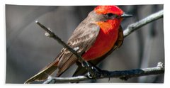 Beach Towel featuring the photograph Vermilion Flycatcher by Dan McManus