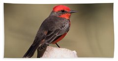 Vermilion Flycatcher In Northern California Beach Towel