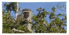 Vervet Monkey Perched In A Treetop Beach Towel