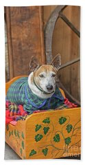 Beach Towel featuring the photograph Very Old Pet Dog In Clothes On Own Bed by Patricia Hofmeester