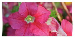 Very Pink Petunia Beach Sheet