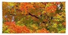 Beach Towel featuring the photograph Vibrant Sugar Maple by Gary Hall