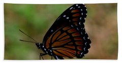 Viceroy Butterfly Beach Towel by Donna Brown
