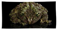 Vietnamese Mossy Frog, Theloderma Corticale Or Tonkin Bug-eyed Frog, Isolated On Black Background Beach Towel