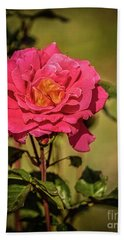 Vignetted  Rose Beach Towel by Robert Bales