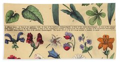 Vintage Botanical Print Showing Variety Of Leaves And Flowers Beach Towel