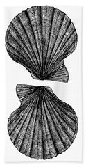 Beach Towel featuring the photograph Vintage Scallop Shells by Edward Fielding