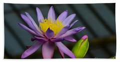 Violet And Yellow Water Lily Flower With Unopened Bud Beach Towel