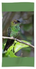 Violet-fronted Brilliant Beach Sheet