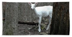 Beach Towel featuring the photograph Vision Quest White Deer by LeeAnn McLaneGoetz McLaneGoetzStudioLLCcom