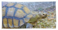 Beach Towel featuring the photograph Walking Turtle by Raphael Lopez