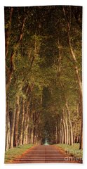 Warm French Tree Lined Country Lane Beach Towel