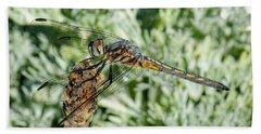 Warming-up - Darner Dragonfly Beach Towel