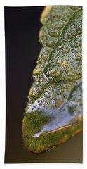 Water Droplet V Beach Sheet by Richard Rizzo