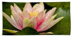 Water Lilly At Eye Level Beach Towel