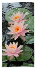 Water Lily Trio Beach Towel