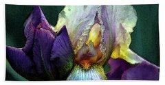 Watercolor Cream And Purple Bearded Iris With Bud 0065 W_2 Beach Towel
