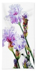 Watercolor Of A Tall Bearded Iris I Call Lilac Iris Wendi Beach Towel