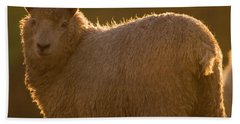 Welsh Lamb In Sunny Sauce Beach Towel