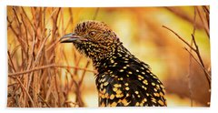 Western Bowerbird Beach Sheet