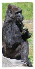Western Lowland Gorilla At The San Francisco Zoo San Francisco California 5d3188 Beach Towel