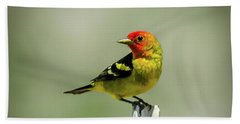 Western Tanager At The Ranch Beach Towel