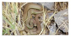 Western Yellow-bellied Racer, Coluber Constrictor Beach Towel