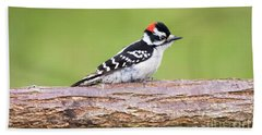 Beach Sheet featuring the photograph Wet Downy Woodpecker  by Ricky L Jones