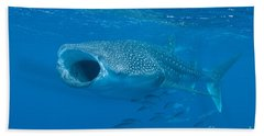 Whale Shark, Ari And Male Atoll Beach Towel