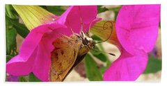 Whirl-about Skipper Butterfly Beach Sheet by Donna Brown