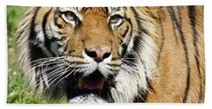 Whiskers  Beach Towel by Steve Taylor