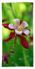White And Red Columbine  Beach Towel