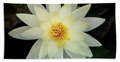 White And Yellow Water Lily Beach Towel