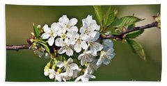 White Apple Blossoms Beach Towel
