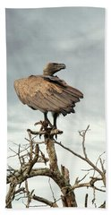 White-backed Vulture Perched On Tree Branch Beach Towel
