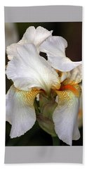 Beach Towel featuring the photograph White Bearded Iris by Sheila Brown